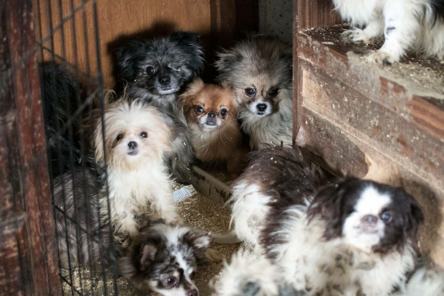 Dogs living in cramped space