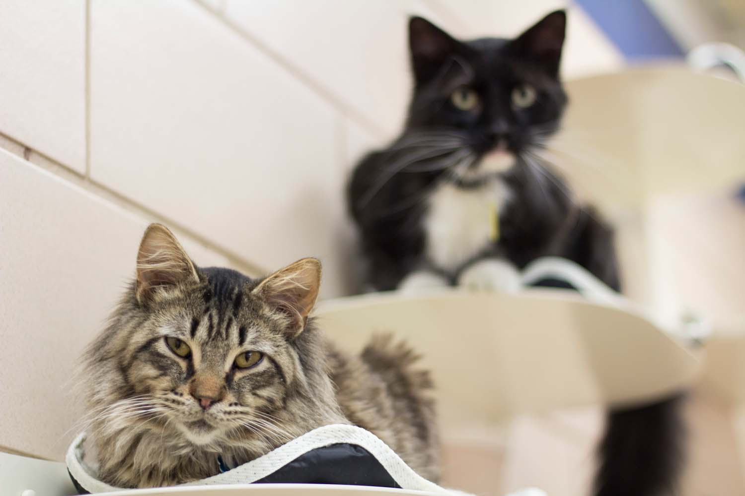 Two cats in shelter