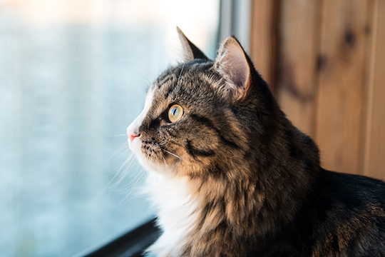 Are outdoor cats happier? | Animal Humane Society