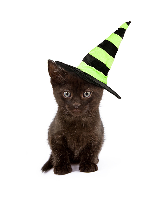 Make sure your cat is comfortable with their Halloween costume