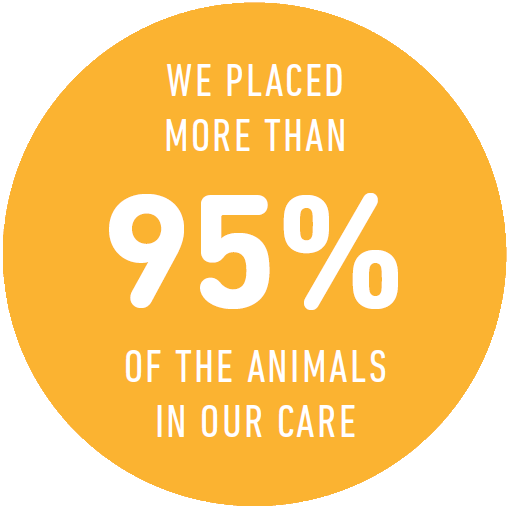We placed more than 95% of the animals in our care in FY18!