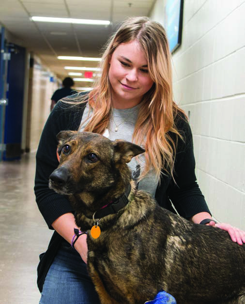 Andreia, placed with Ruff Start Rescue