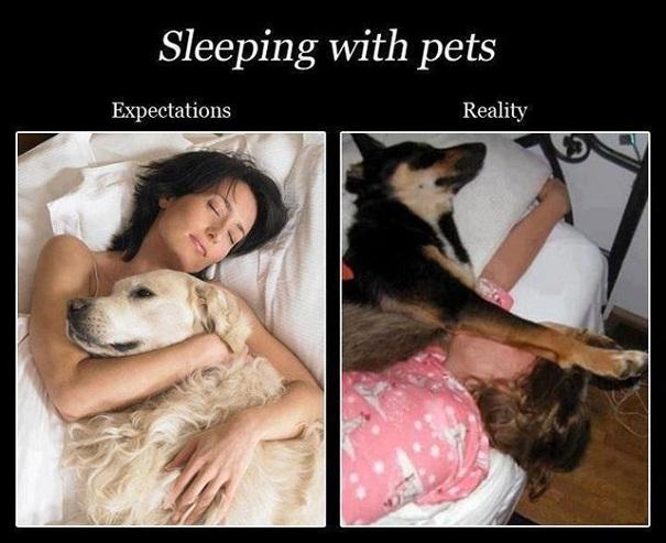 Sleeping with pets expectation vs. reality