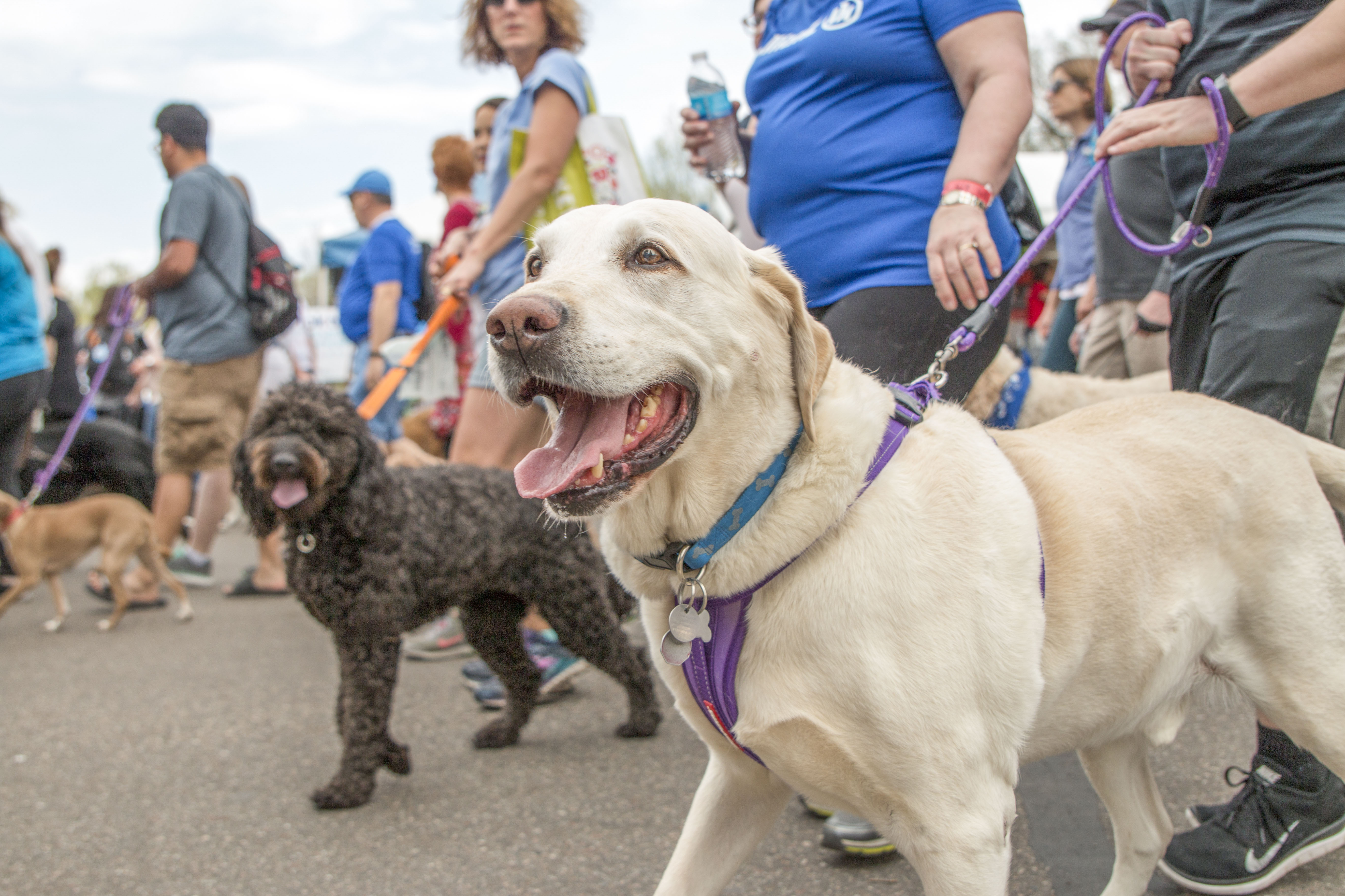 Dogs having fun at the Walk for Animals