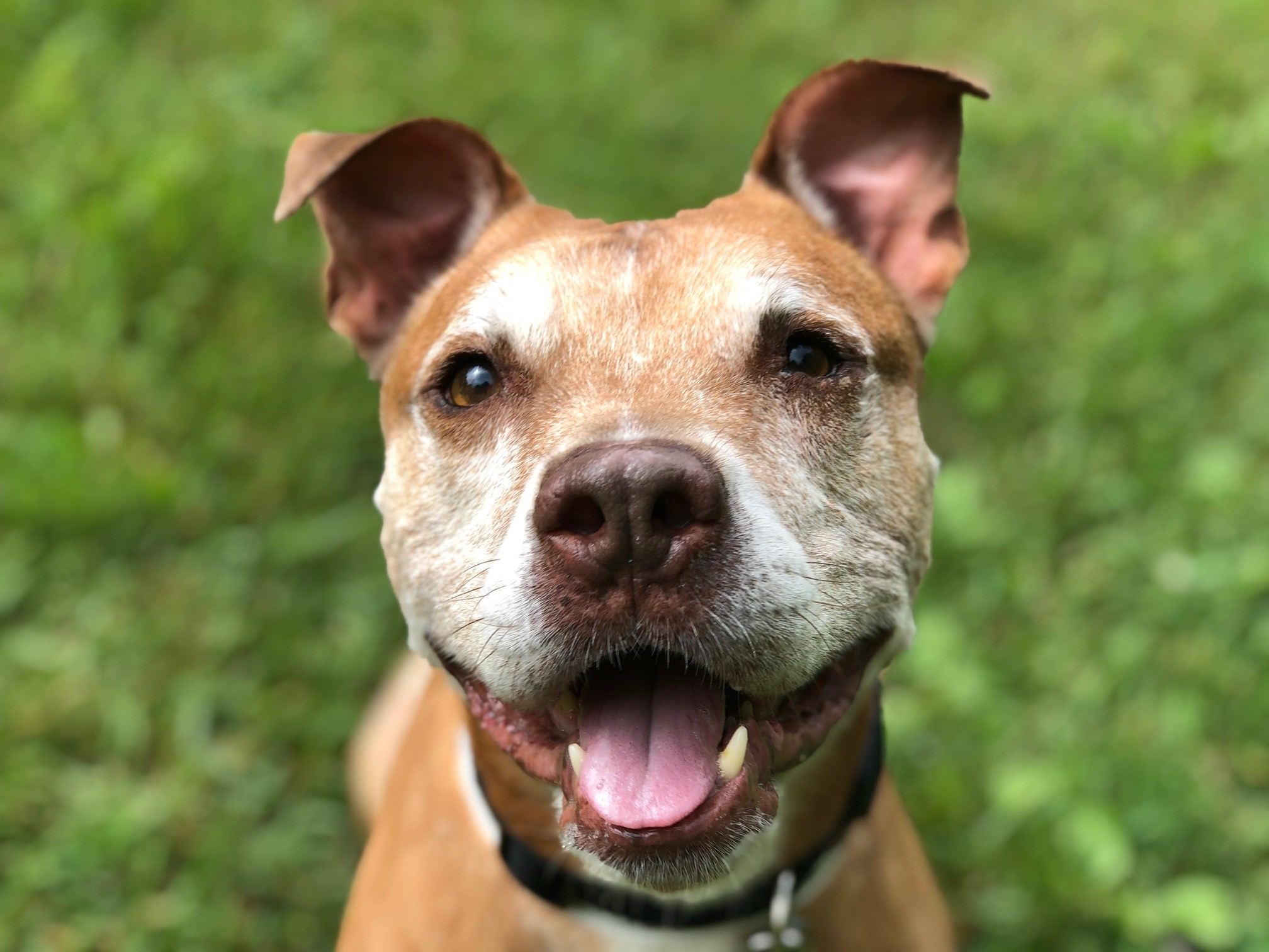 Winkie is WCCO's Pet of the Week