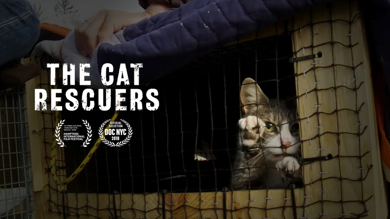 The Cat Rescuers, Exclusive Screening at AHS