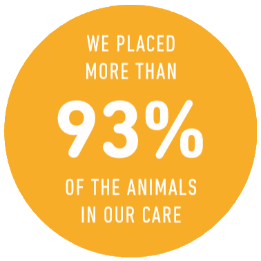 We placed more than 93% of the animals in our care in FY19
