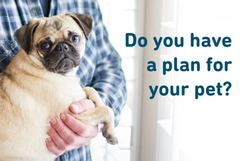 Do you have an emergency plan for your pet?
