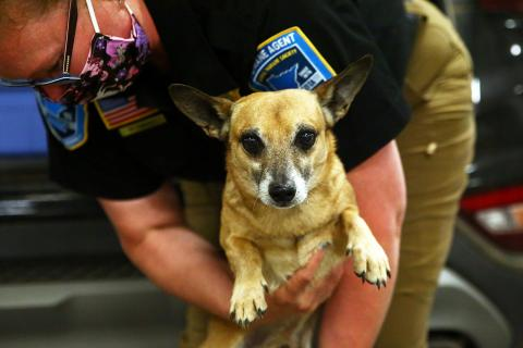 Chiweenies released to Animal Humane Society