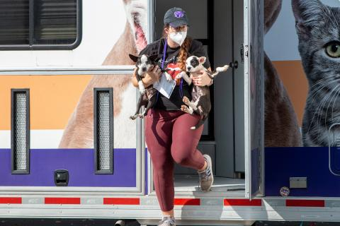 AHS transport staff holding two small dogs
