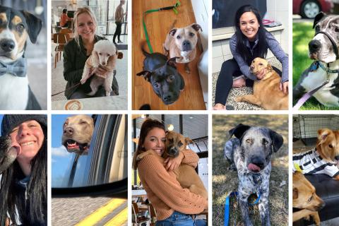 Our top ten favorite dog adoption stories in 2020 (so far)