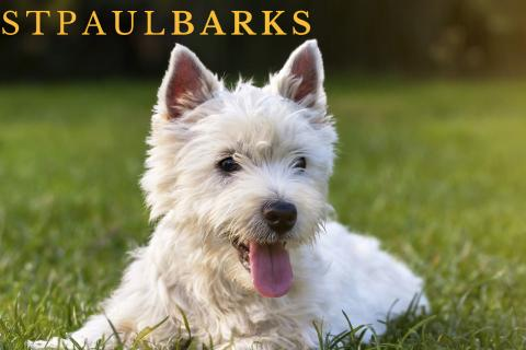 St. Paul BARKS photo contest