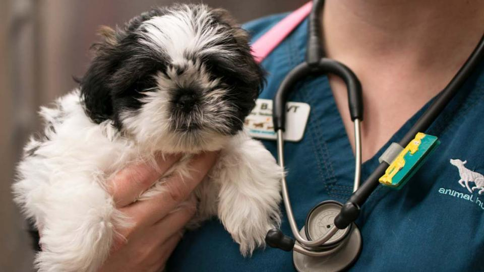 Small puppy being held by veterinarian