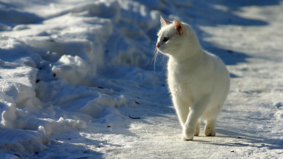 Outdoor Cats In Cold Winters How They