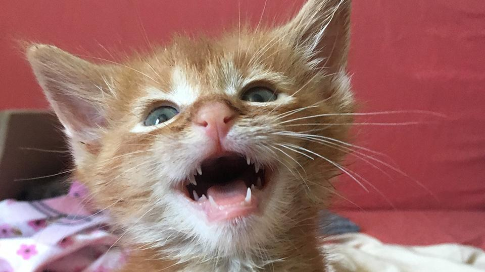 Five ways to keep your pet's teeth clean