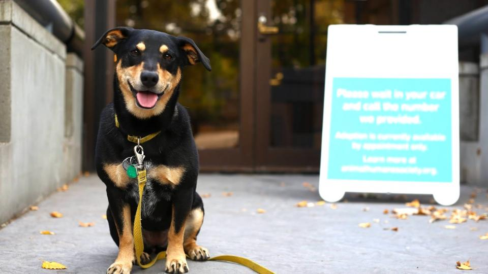 Dog with adoption by appointment sign