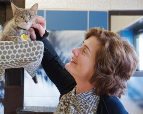 Janelle spends time with a shelter cat in one of the cat colony rooms