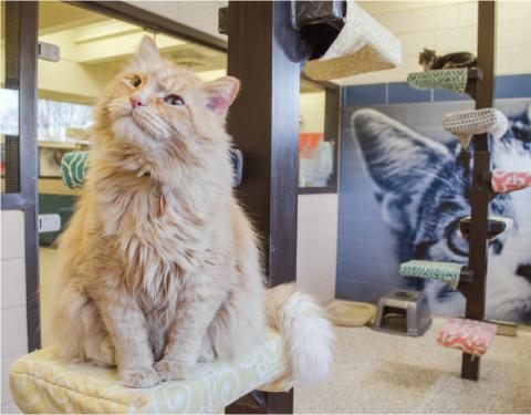 A cat enjoys sitting on a perch in the cat colony room