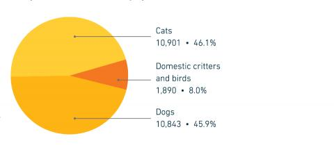 FY18 Companion animal intake by species