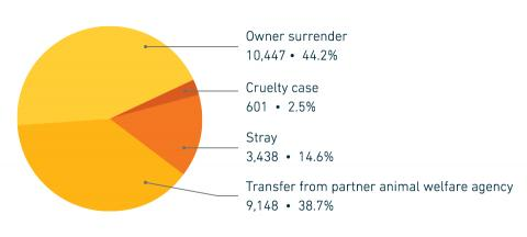 FY18 Companion animal intake by reason for surrender