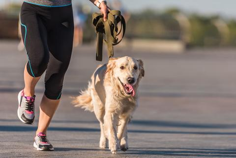 Running with your dog is good for both of you!