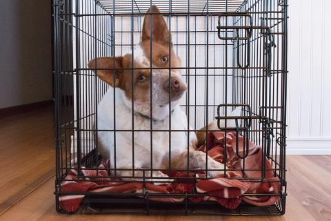 Crate training can help keep your dog calm for the long hours you're away.