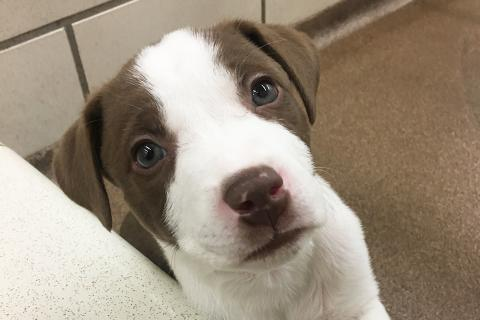 Bud the puppy