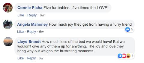 Facebook comments on more pets, more love