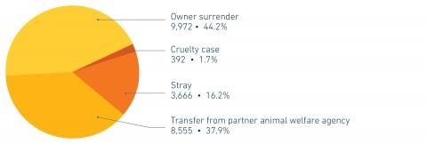 FY19 Companion animal intake by reason for surrender