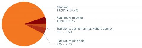 FY19 Companion animal placement by type