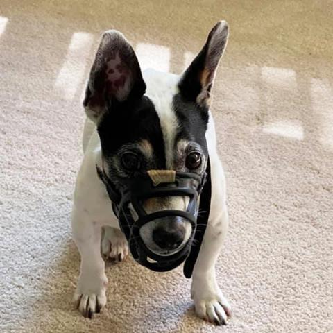 Shadow with a muzzle
