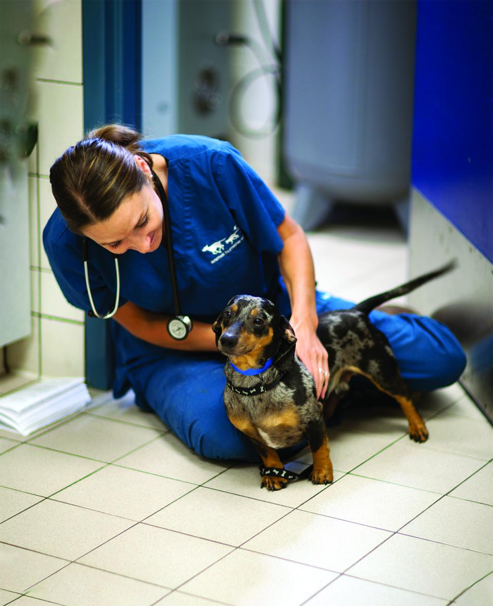 Veterinary staff with small dog