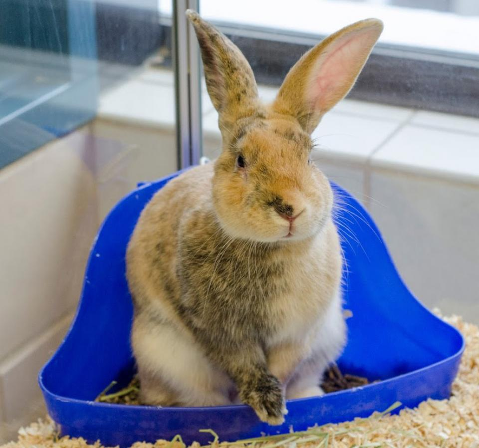 Brown Rabbit in cage