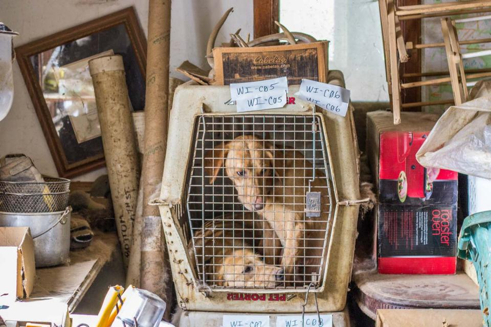 Two dogs cramped into one kennel