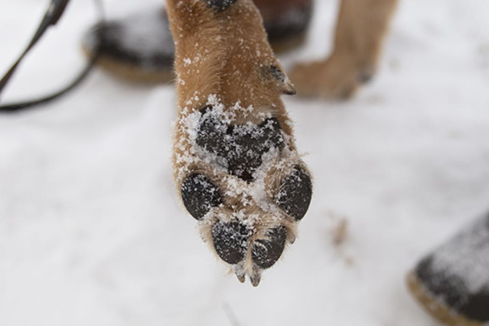 Paw with no balm