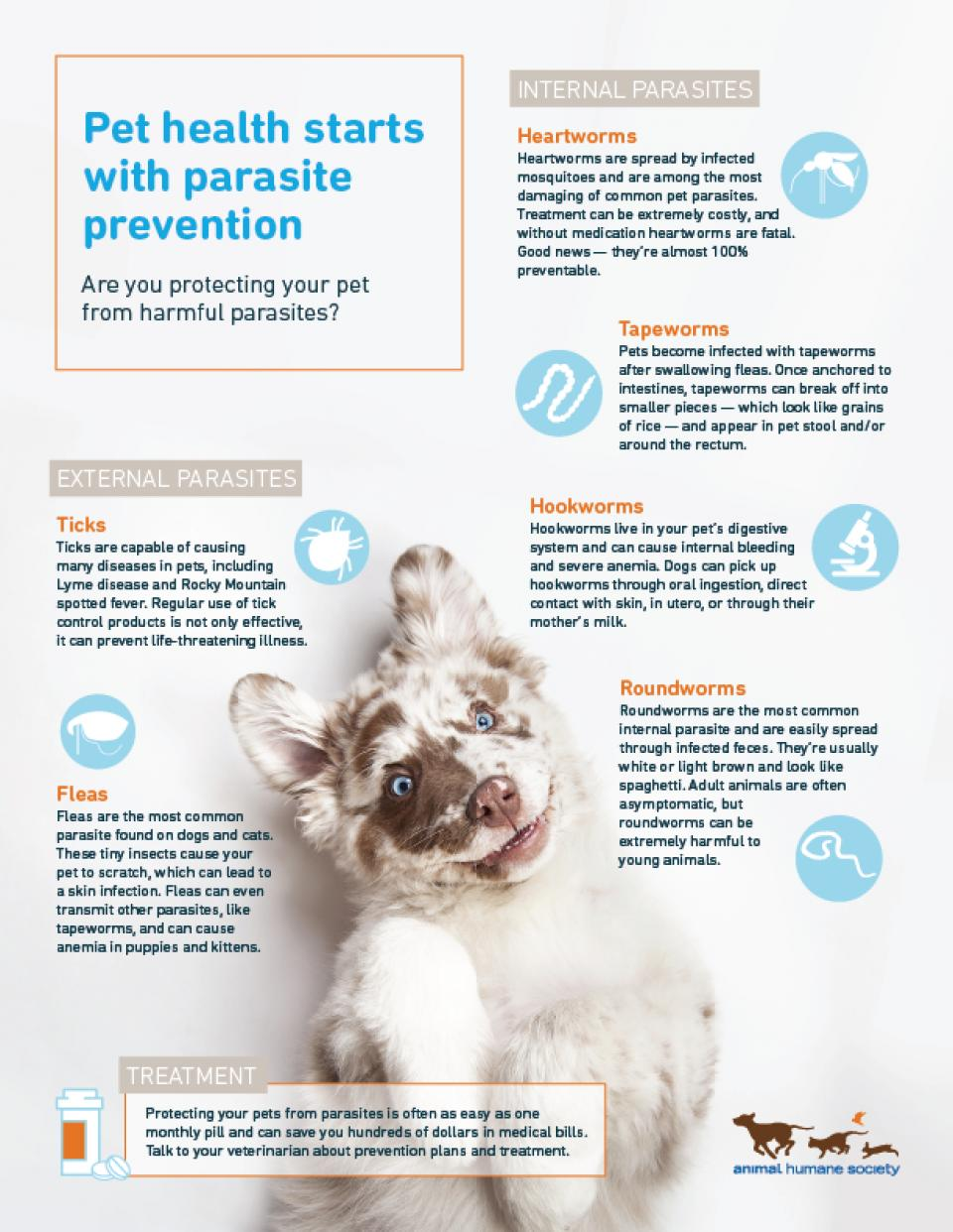 Infographic on common pet parasites