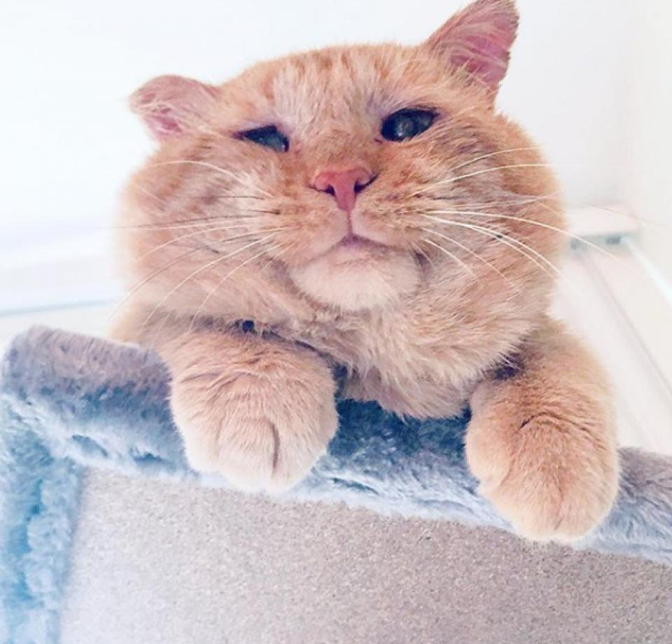 Once A Stray Bruce Willis The Cat Has A Home Of His Own Animal Humane Society