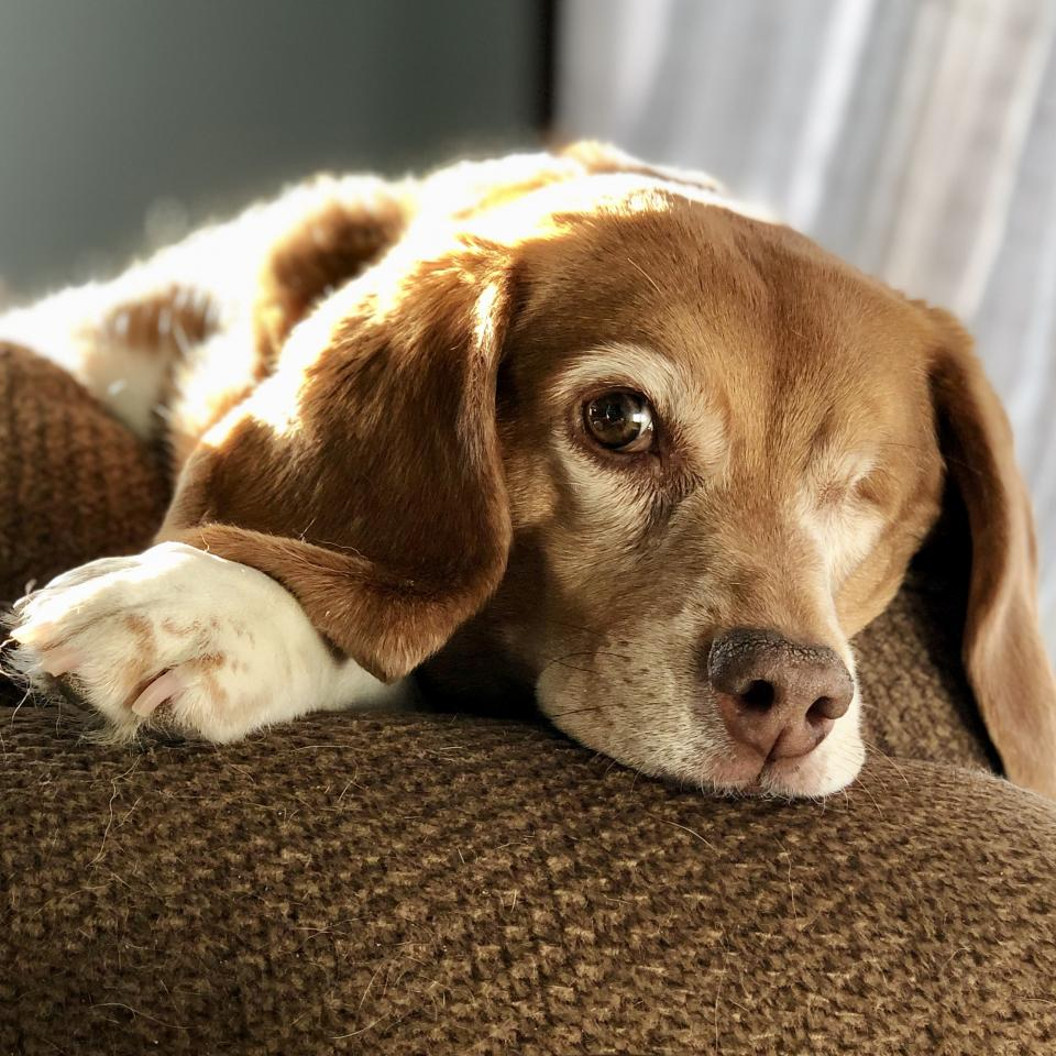 Ethel on the couch