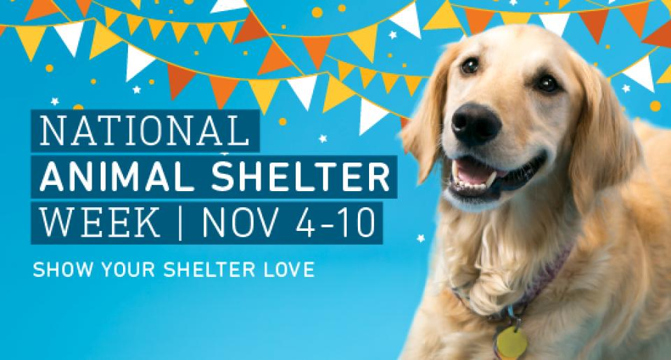 National Animal Shelter Week Open House Animal Humane Society