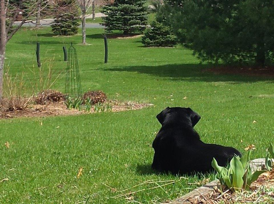 Rocky, in his yard