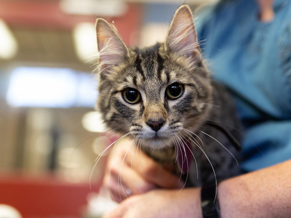 Cat rescued in Bloomington, MN Humane Investigations Case
