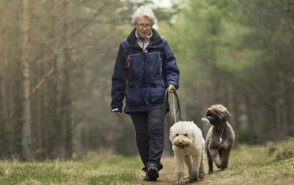 Woman walking two dogs in wooded area