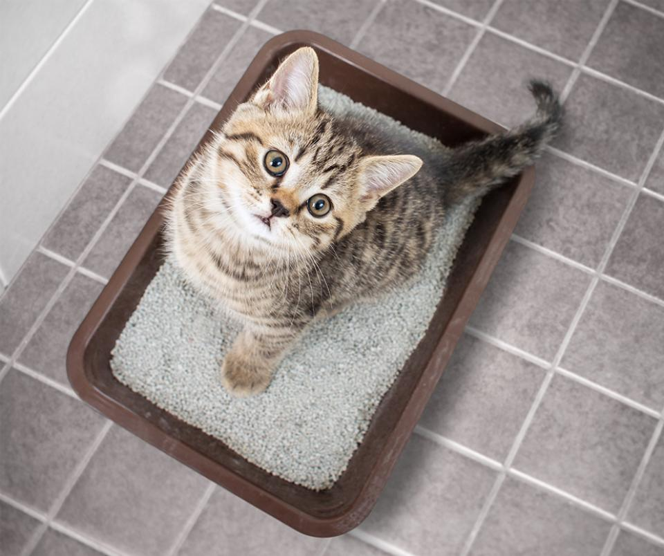Kitten in litterbox, tips for resolving litterbox issues