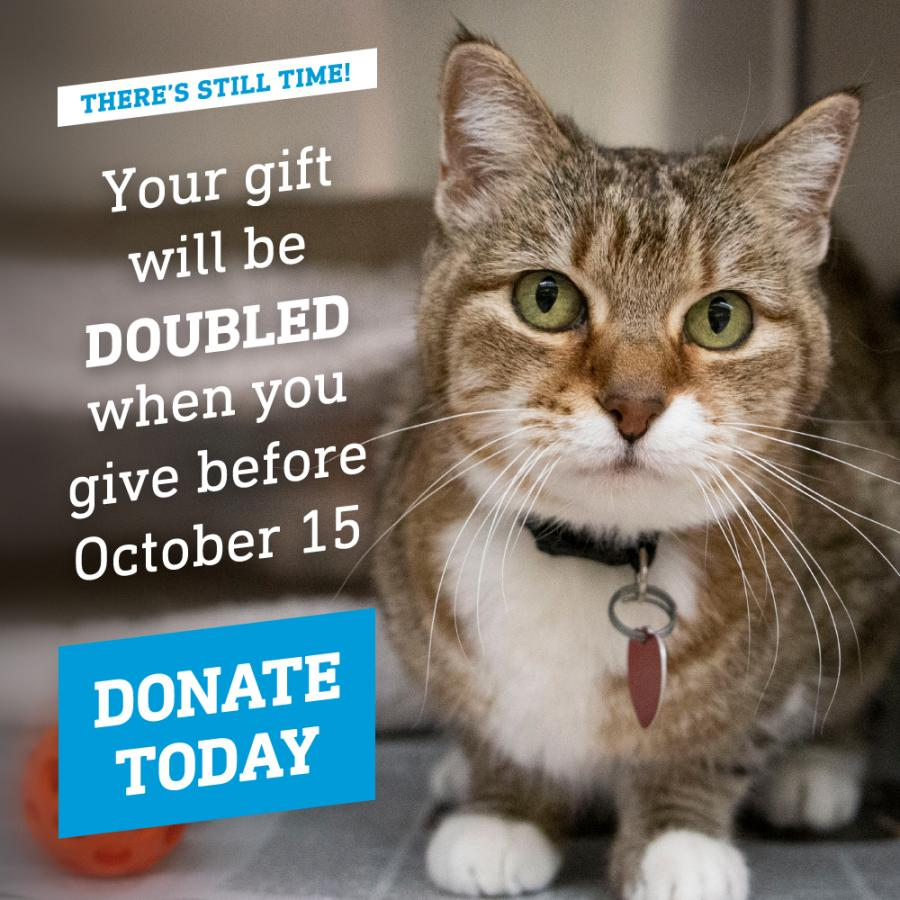 Your gift will be doubled when you give before October 15
