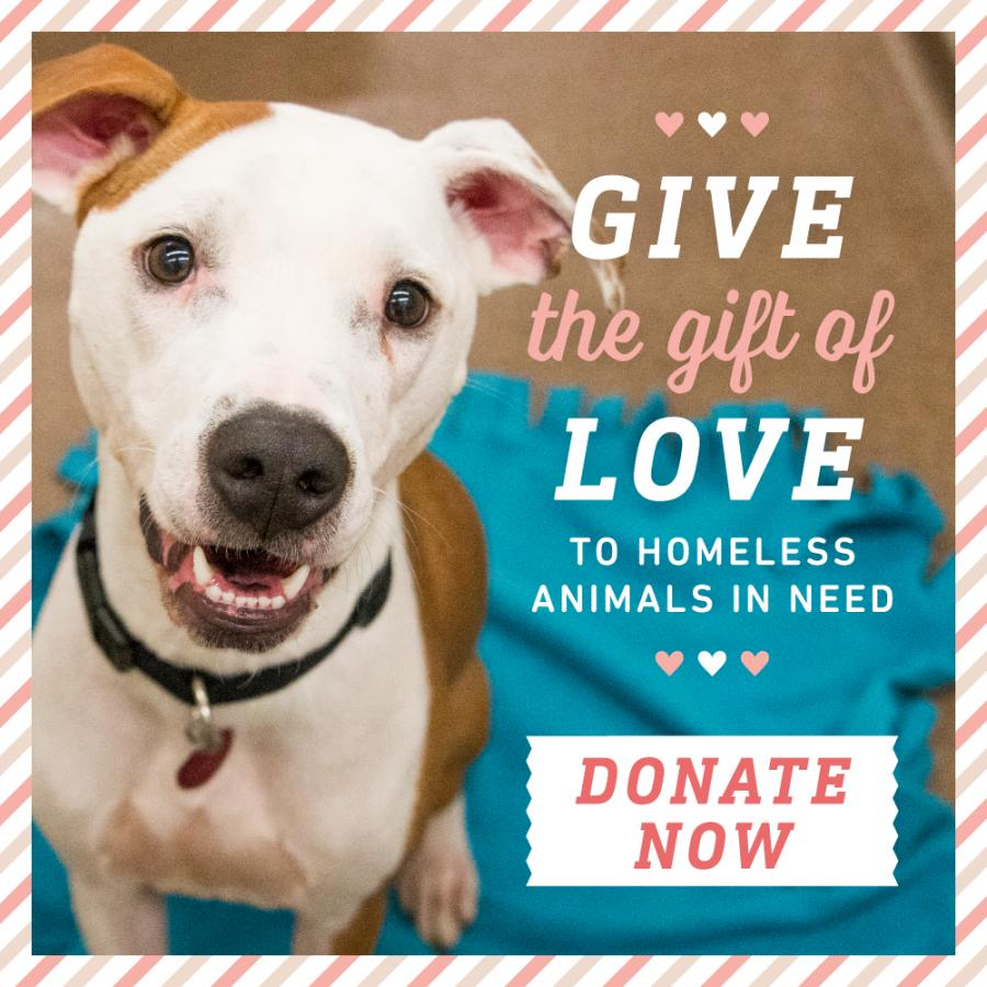 Give the gift of love to homeless animals in need